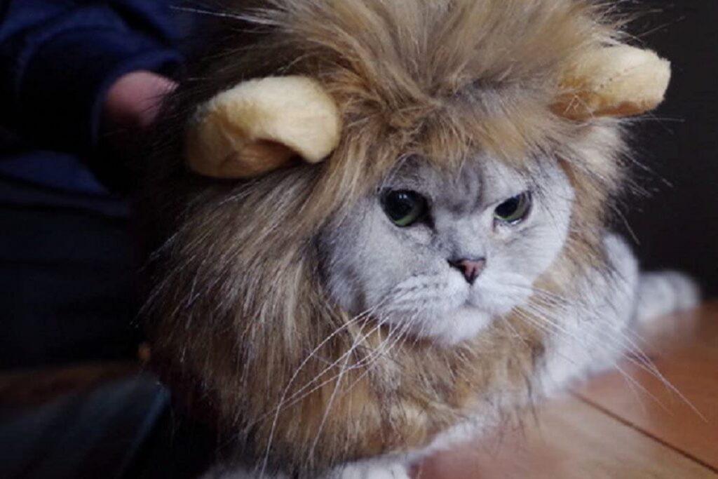 costume da leone per gatto