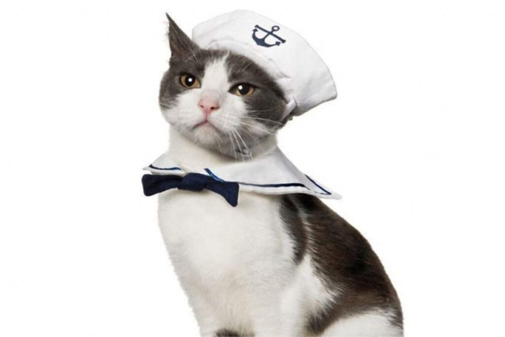 gatto travestito da marinaio