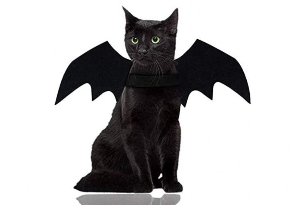 costume da pipistrello per gatto