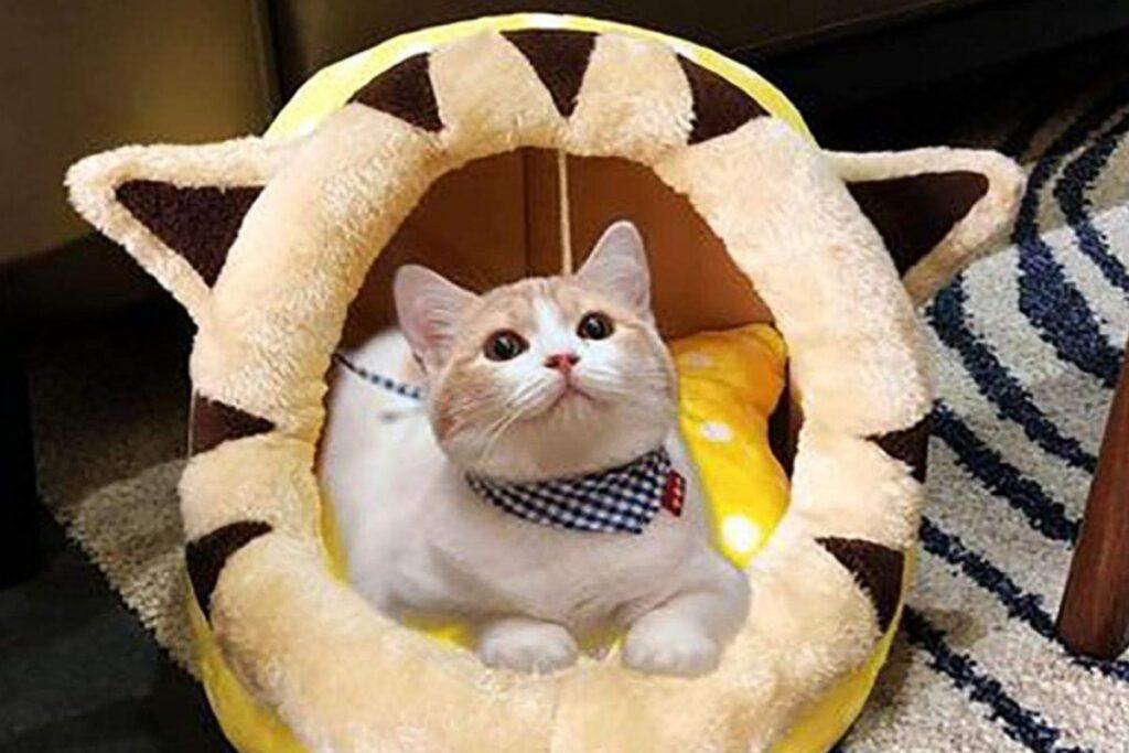 gattino dentro alla cuccia
