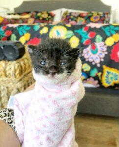gattina dolce avvolta