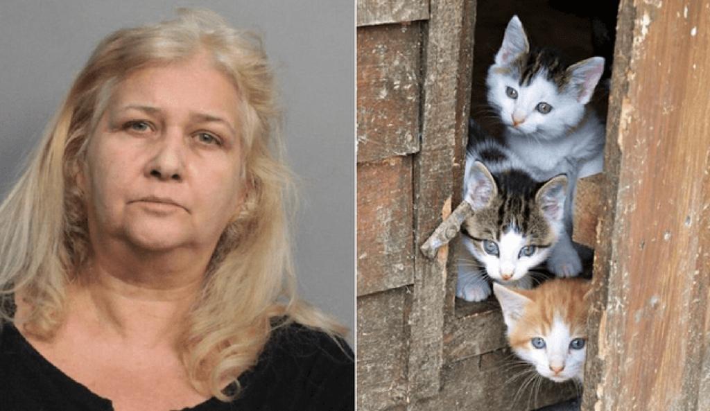donna arrestata per aver maltrattato gatti