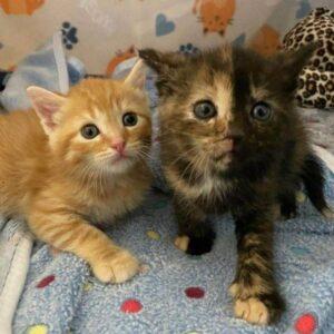dolci gattini su una coperta