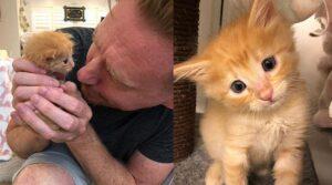 gattino arancione con il padrone