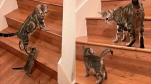 mamma gatta e gattino