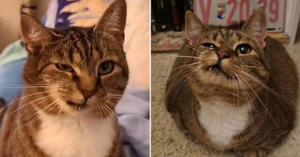 gatta con mascella rotta