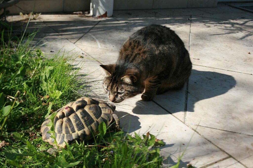 gatto con una tartaruga