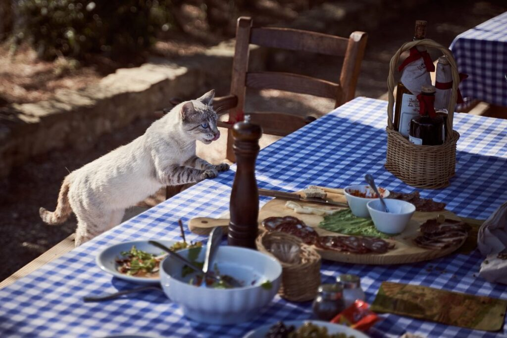 gatto ruba cibo dal tavolo