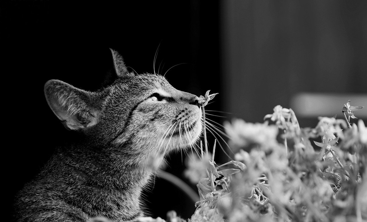 gatto gioca con fiori