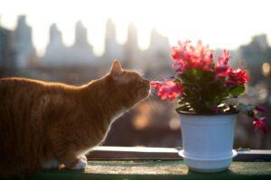 gatto sente odore pianta