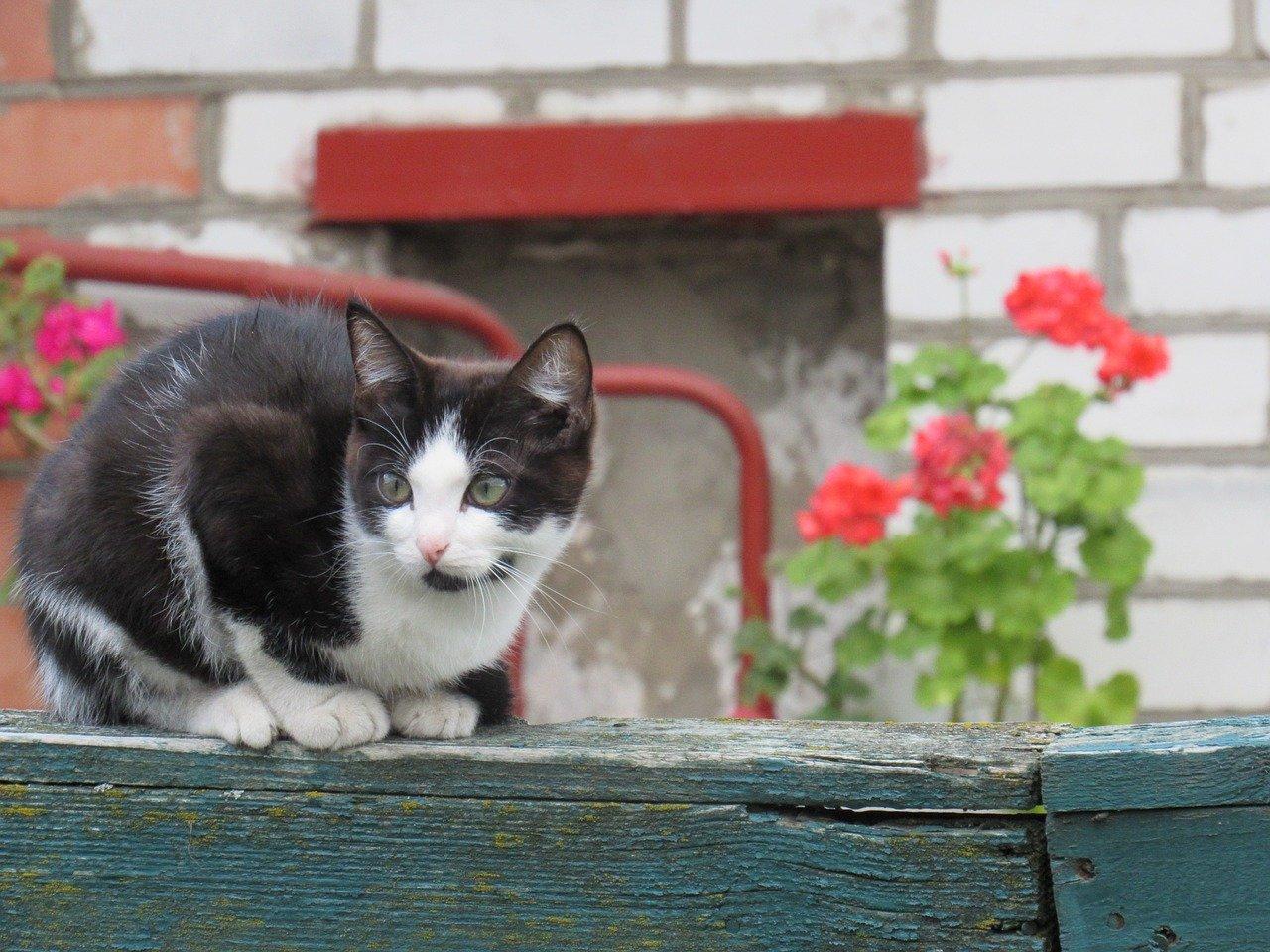 gatto gironzola