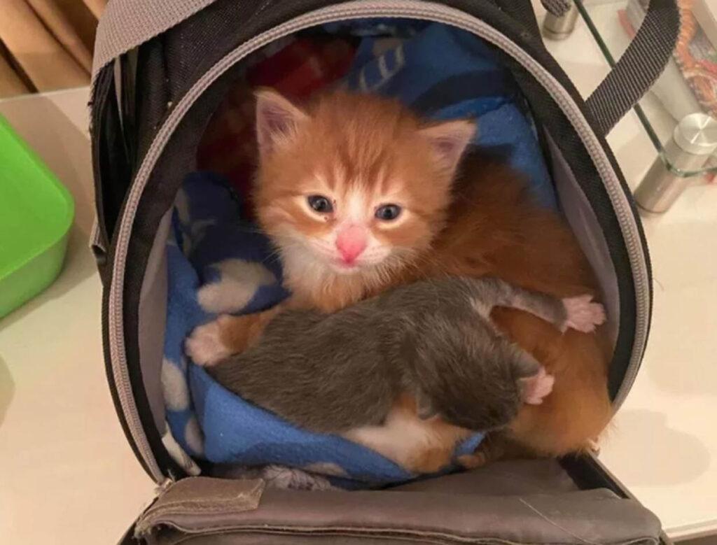 gattino rosso con gattino grigio