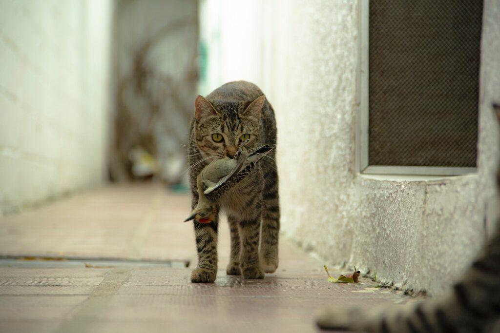 gattino a caccia