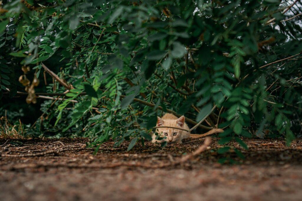 gattino tra le foglie