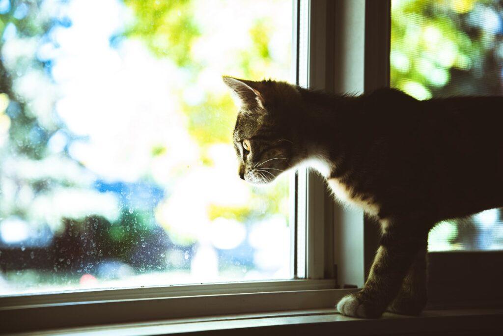 gattino alla finestra