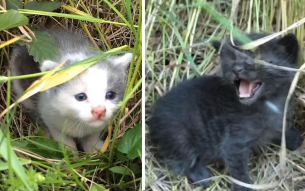 gattini nell'erba