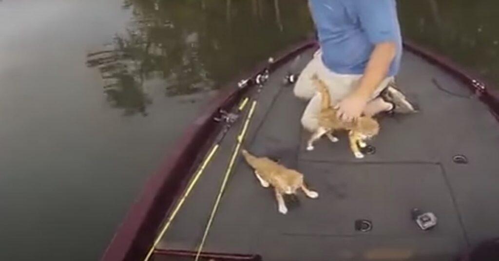 gatti salvati in Alabama