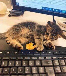 gattino trovato su un treno a lunga percorrenza