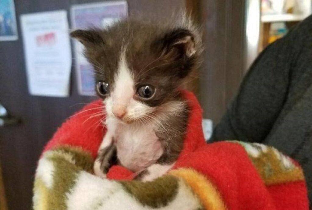 gattino avvolto da coperta