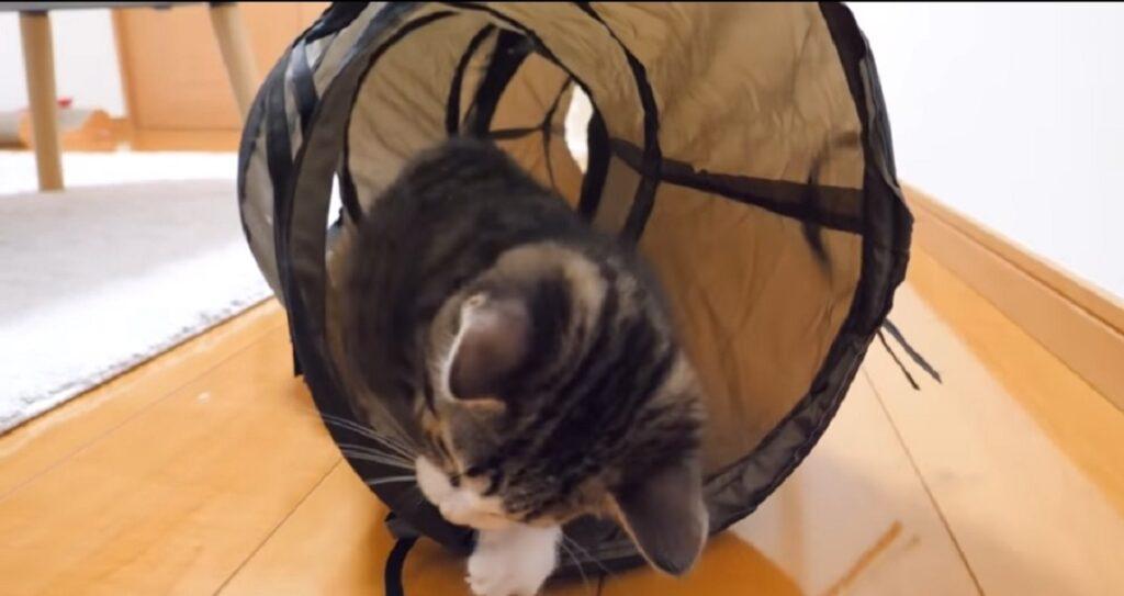 gattino coco gioca con il tunnel per gatti