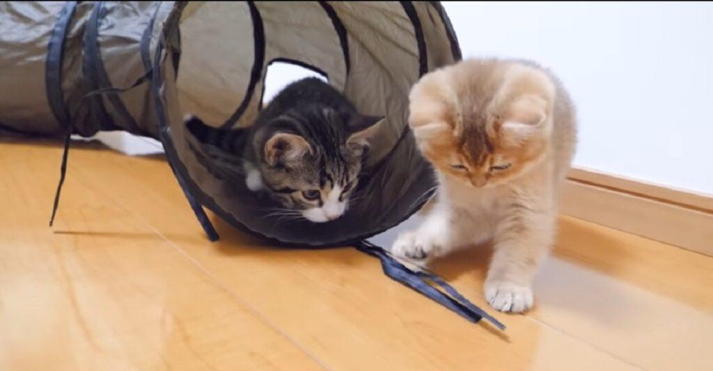 gattino coco gioca