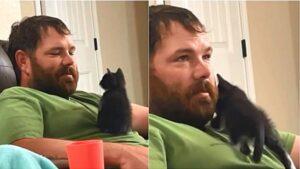 gatto sopra al proprietario