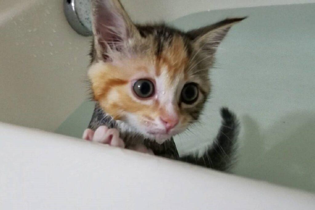 gattino nella vasca da bagno