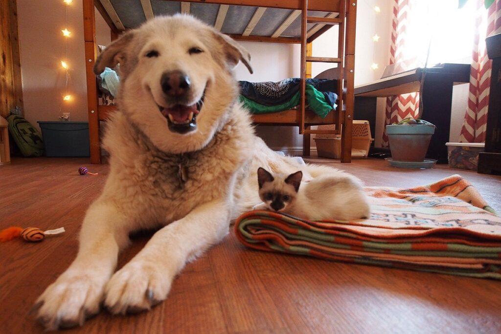 gattino disteso su un tappeto