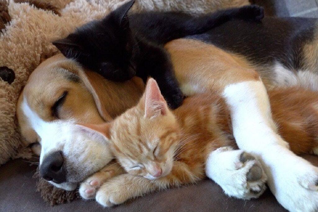gattino e cane dormono insieme