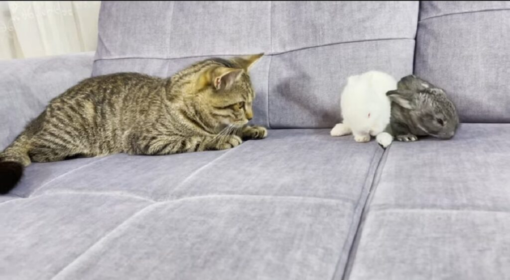 il gatto sammy incontra due coglietti per la prima volta