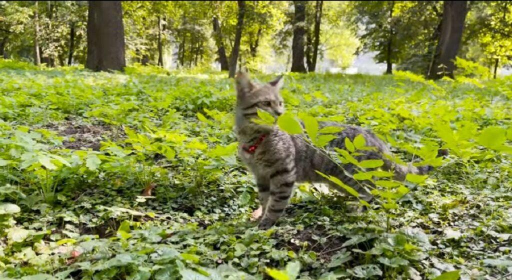 gatto sammy cammina nel bosco per la prima volta