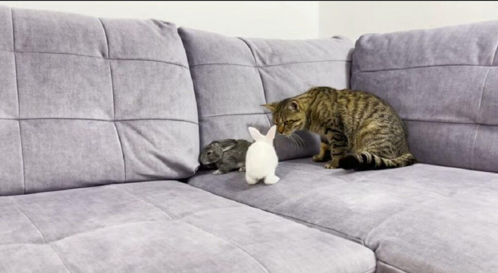 gatto sammy e due coniglietti