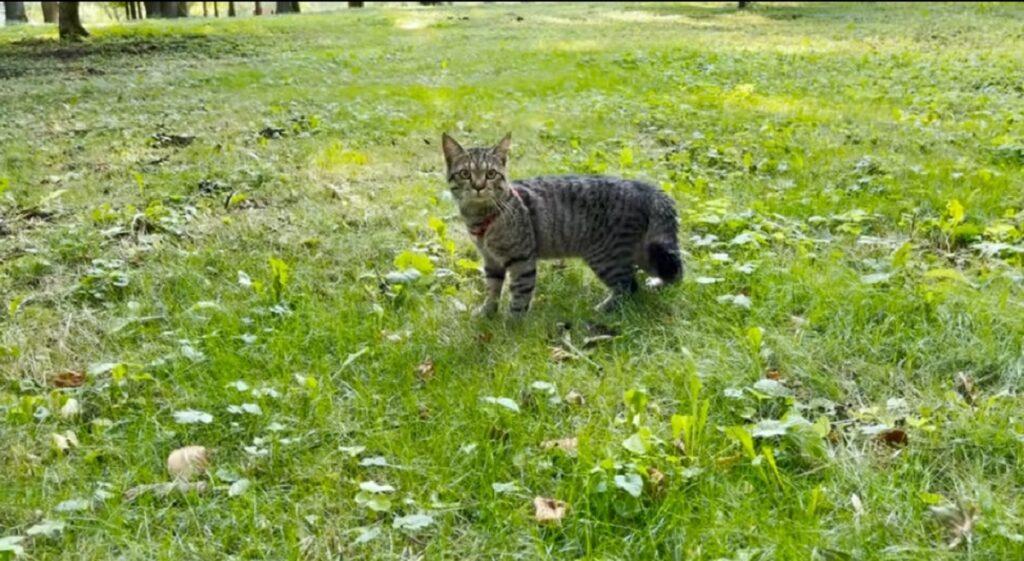 gatto sammy nel bosco per la prima volta
