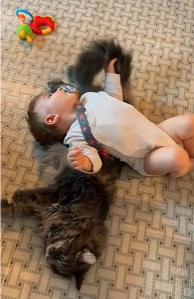 bambino sdraiato sopra gatto