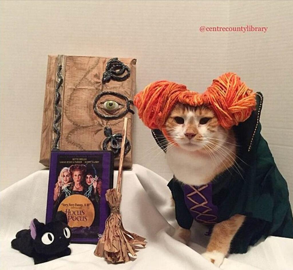 gatto con costume