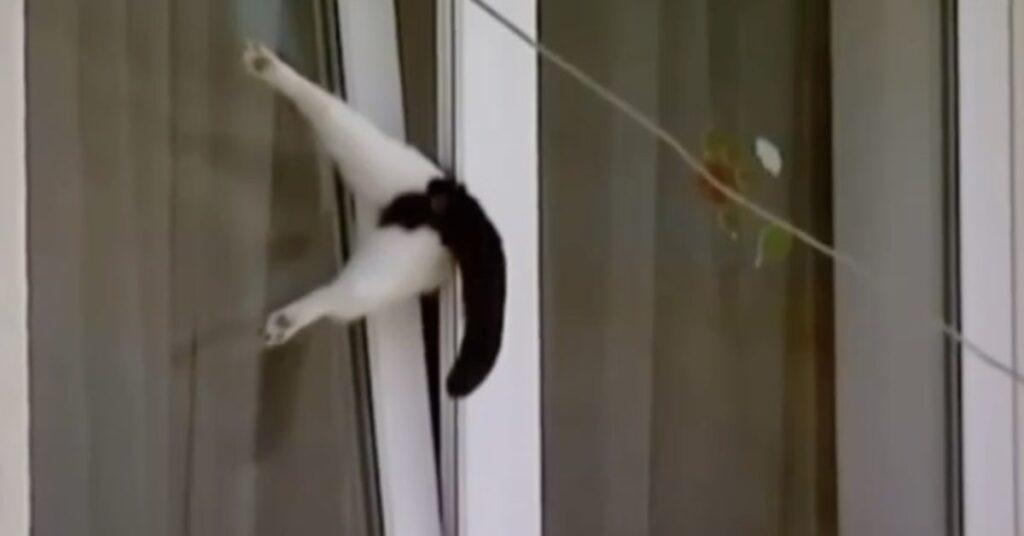 gatto incastrato salvato in Romania