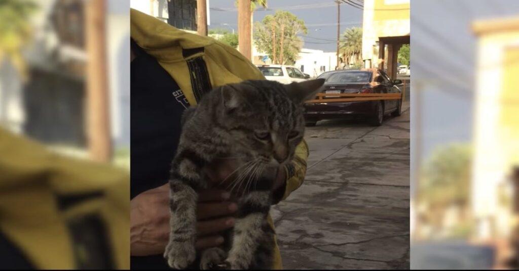 gatto grigio salvato dai pompieri