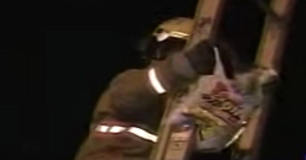 pompiere salva un gatto in pericolo