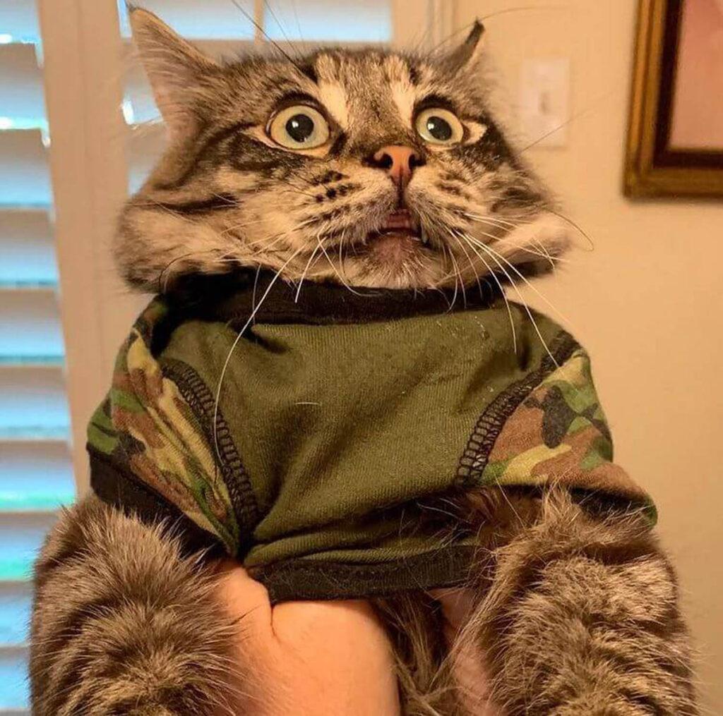 gatto con maglietta