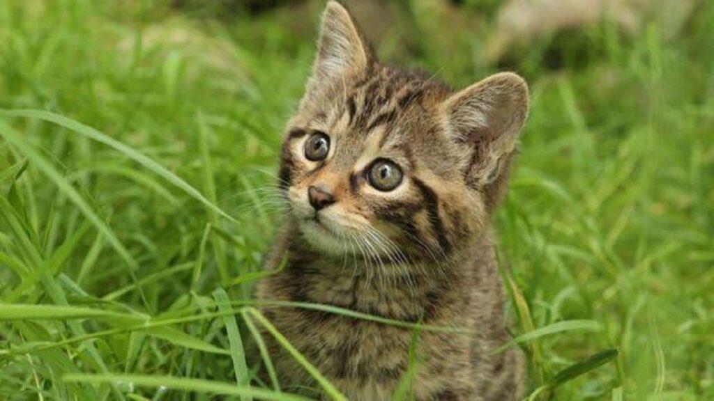 gatto salvato in bolivia