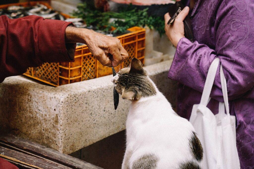 gatto che mangia un pesciolino