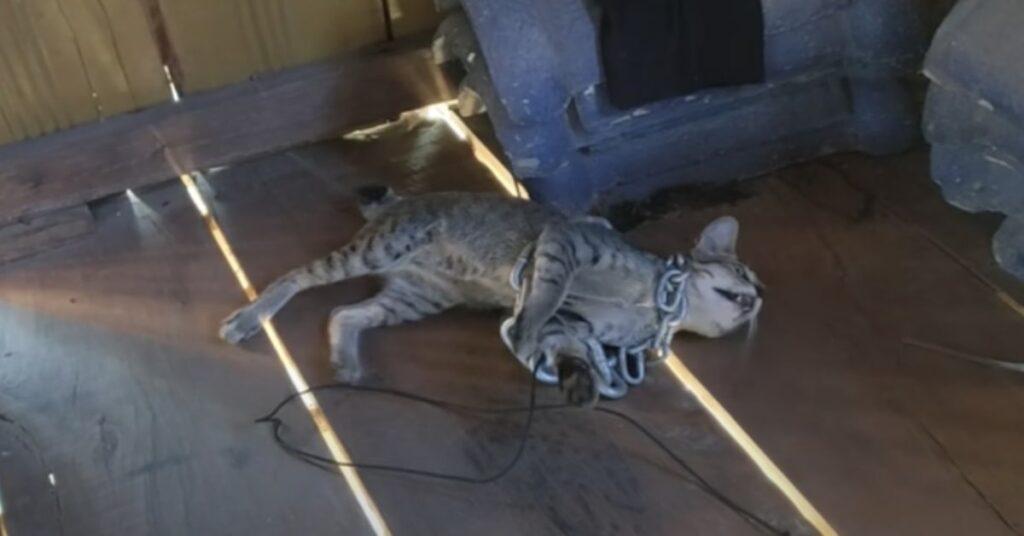 gatto avvolto in catene