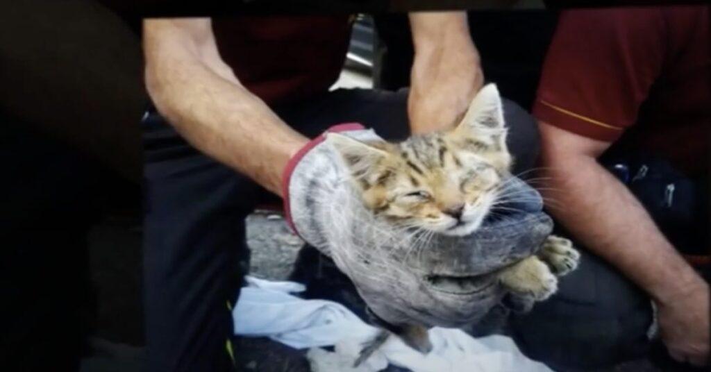 gatto prigioniero salvato dai pompieri