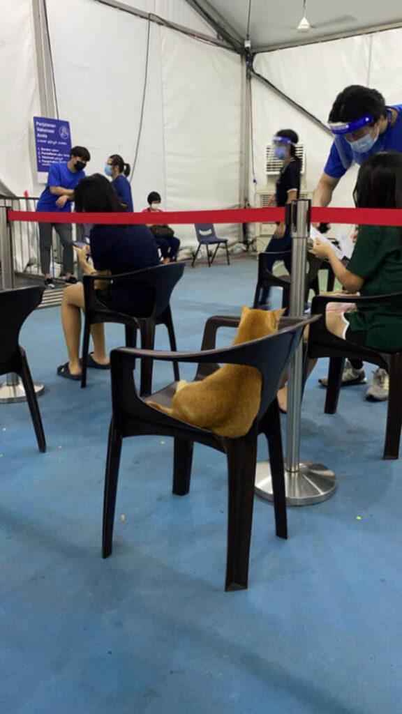 gatto seduto su sedia