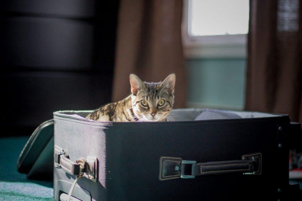 gatto dentro alla valigia