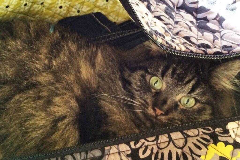 gatto si nasconde nella valigia