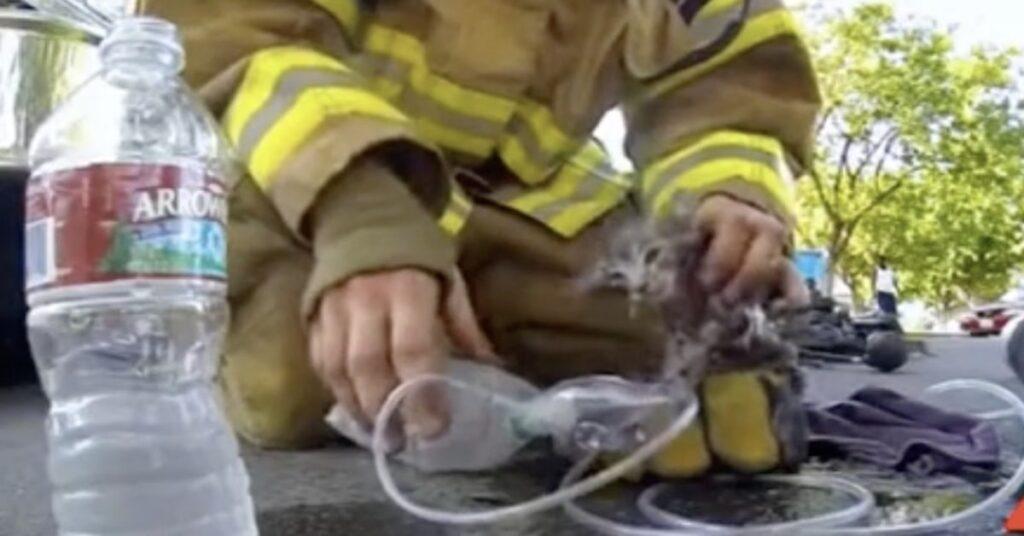 pompiere salva un gatto in California