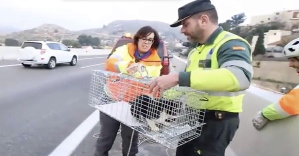 volontari salvano un gatto in Spagna