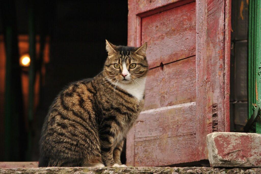 gatto davanti a una porta rossa