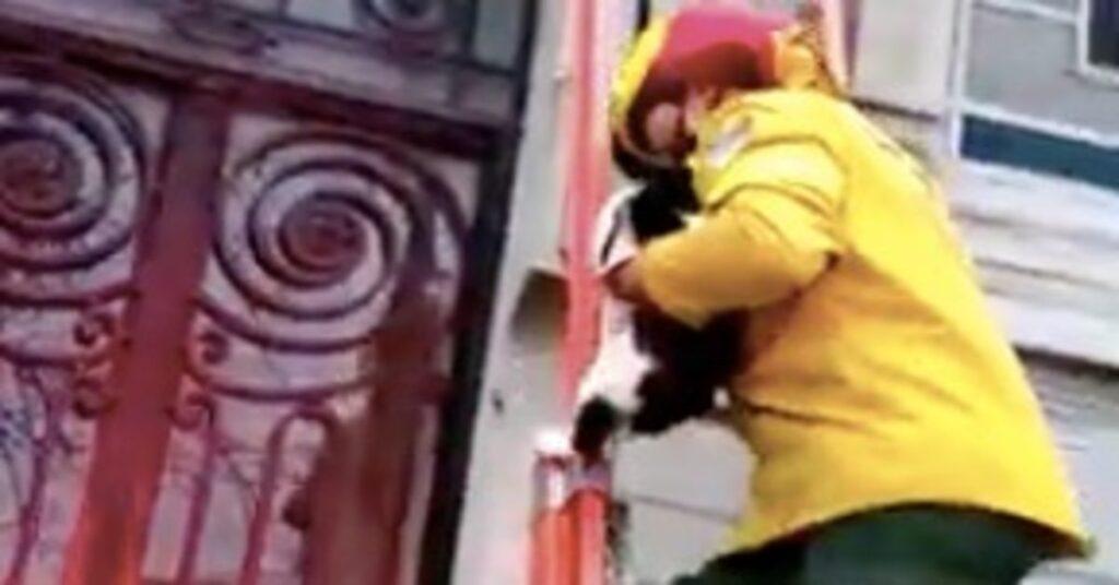 pompiere salva gatto in pericolo